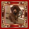 Sold-Puppy