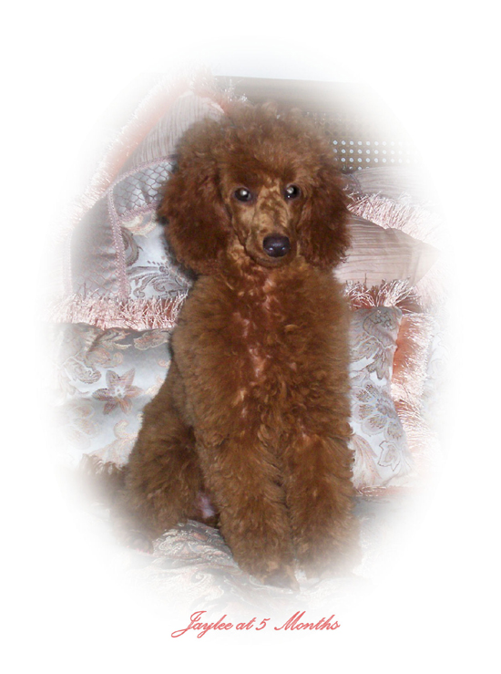 "One of Henny's sold puppies ""JayLee Lynn at 5 months"""