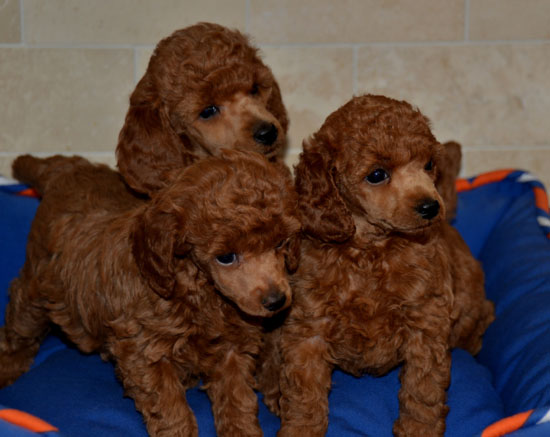rachel puppies